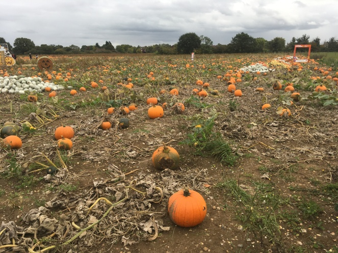 pumpkin picking halloween fall autumn orange
