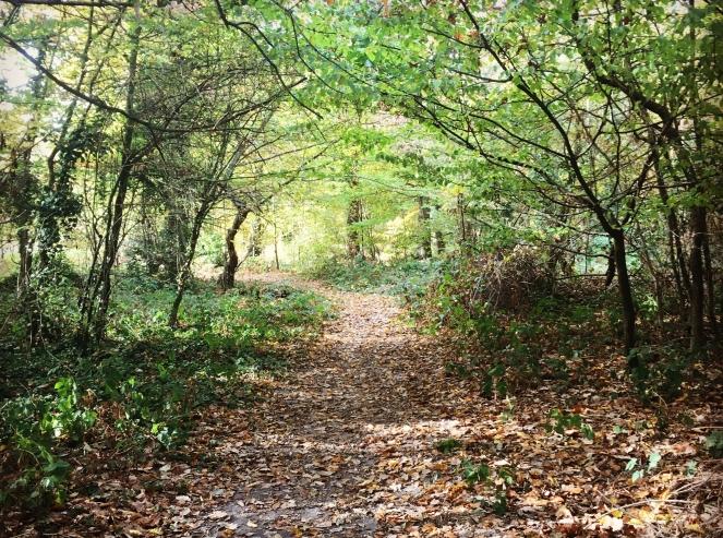 woods autumn fall walk